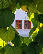 window-1510178